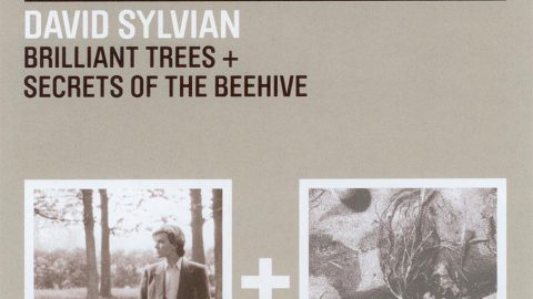 2 for 1: Brilliant Trees + Secrets Of The Beehive